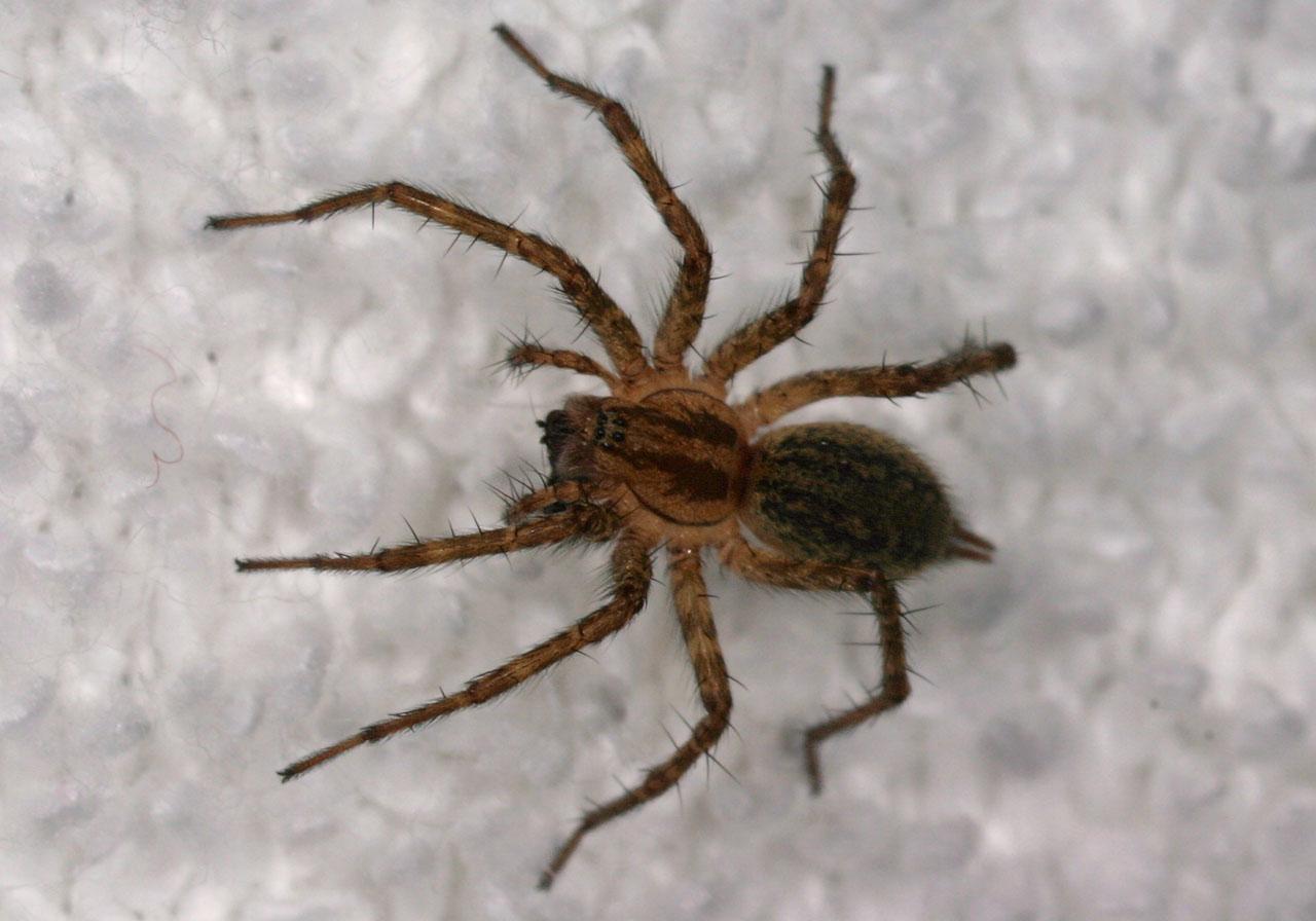 http://www.stevenanz.com/Main_Directory/Plants_Animals/Invertebrates/Arachnids/Arachnids_Part_4_Misc/original/spider_452.jpg